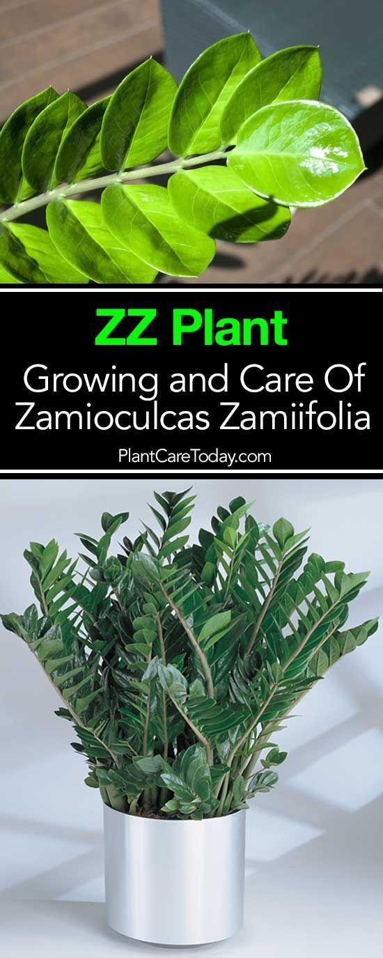 Durable Plants For The Garden: 38 Best Plant Nutrient Deficiencies Images On Pinterest