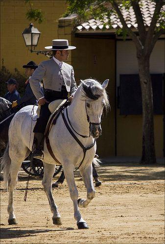 Horses at Yeguada de la Cartuja - Jerez, SPAIN The man, the horse, both say Spain to me.....