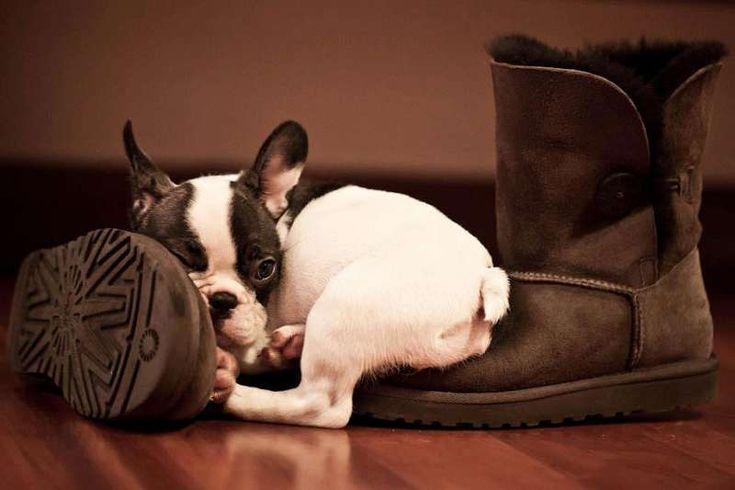 Картинки обуви с животными