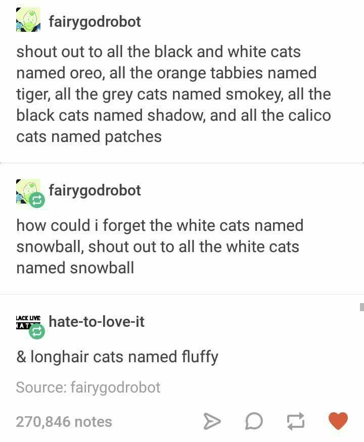 """My cat is named Lii (pronounced Lee) so w can say """"oh his name's Lii, spelled fifty-two"""" like the Roman numeral. LII. Heheheh. #CatsRFun"""