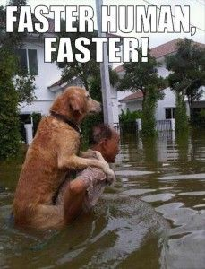 Faster!!!