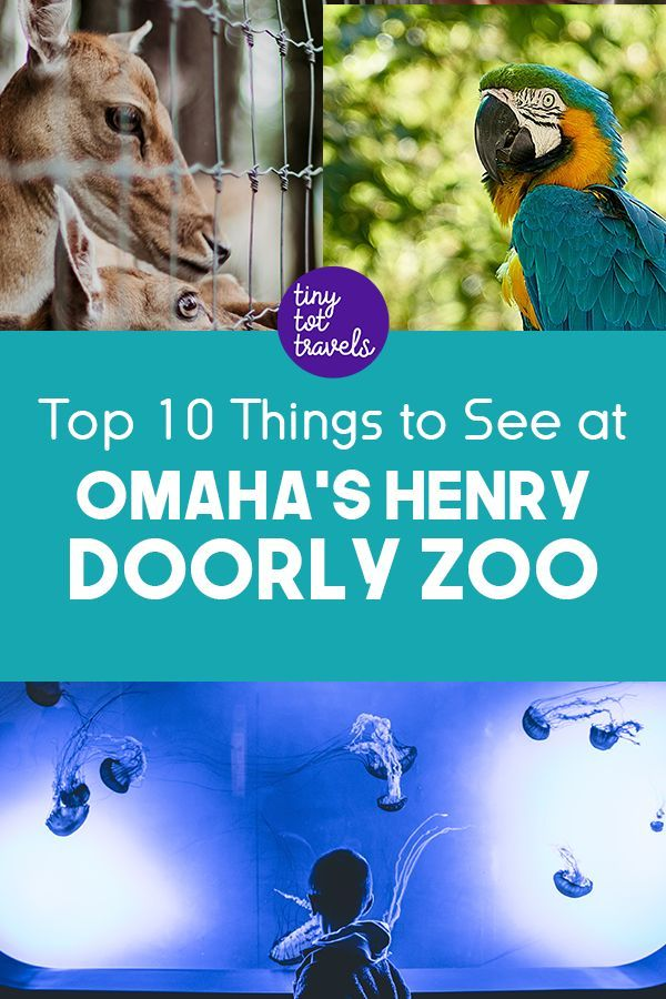 Top 10 Things to See at Omaha's Henry Doorly Zoo | Travel