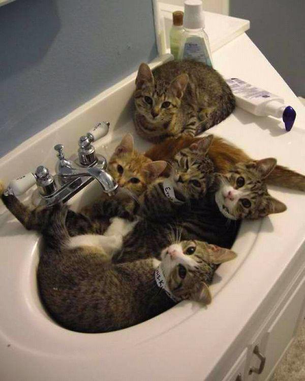 5 Kleine Katzen Im Waschbecken ( Wasserhahn / Bild Nicht Von DIBLu0027  Armaturen   Alle Rechte Dem Anbieter Des Bildes   Siehe Quelle )