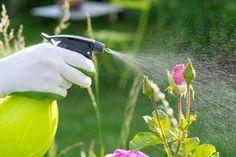 Confira qual a melhor hora do dia para cuidar das suas plantas! #plantas #flores #jardim #plantar
