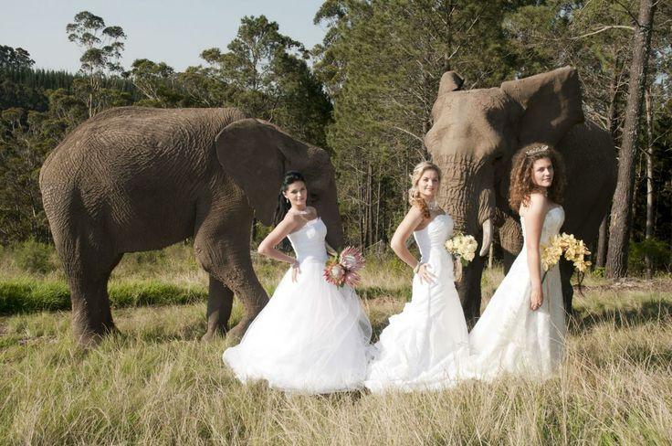Knysna Elephant Park/Cлоновий заповедник в Найзне