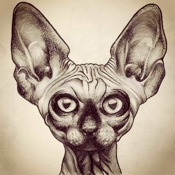 Sphynx Cat Sketch / Illustration