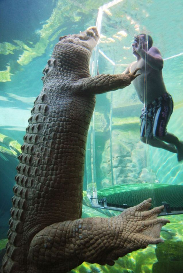 Australia's new Crocosaurus Cove park in Darwin allows thrill-seekers to swim face-to-face with massive saltwater crocodiles. Come on down!!