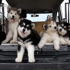 Szóval aranyos kutyák | Giphhy