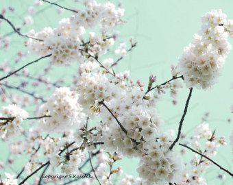 Cherry Blossom fotografía menta verde rosa Print floración árbol pared arte primavera florece 8 x 10
