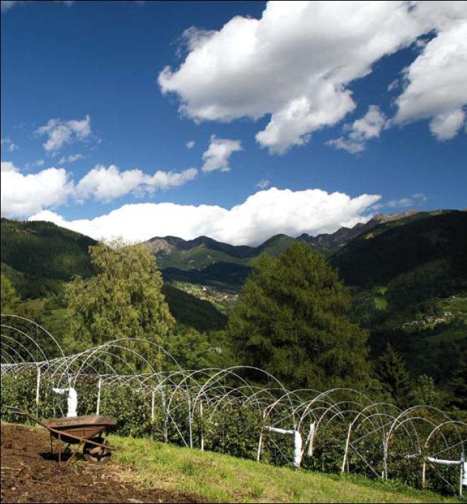Gemma Pallaoro Loc. Pizoi, 10 a 1,5 km dal paese direzione Palù del Fersina 38056 Sant'Orsola Terme - Trento  Tel.:  0461 551187