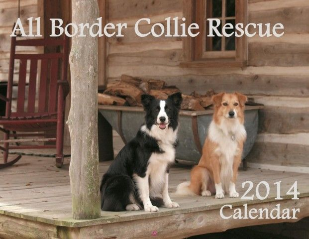 All Border Collie Rescue  765 border collies have found forever home since 2009.  Many more are waiting to find a loving family.