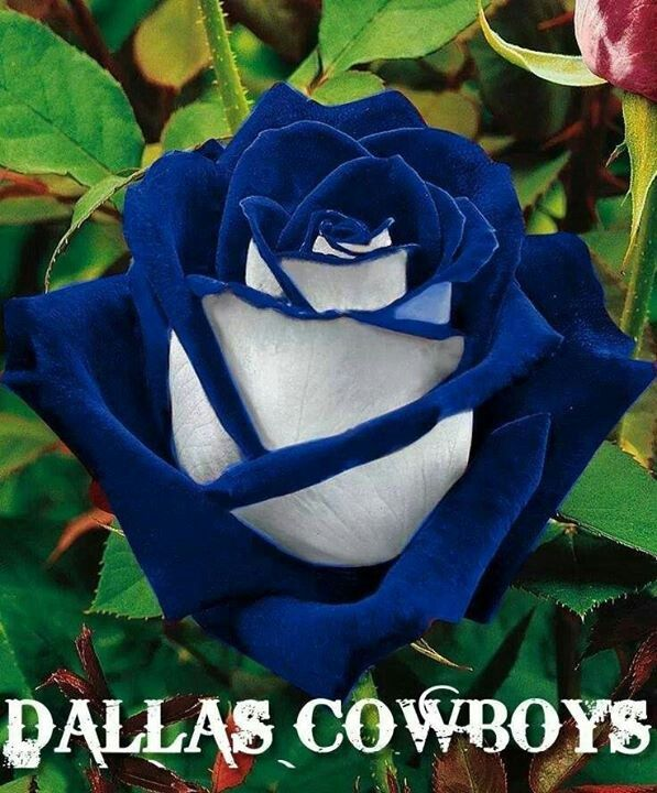 Dallas Cowboys; Absolutely love this! Especially cuz I want blue roses at my wedding....if I get over my fear!