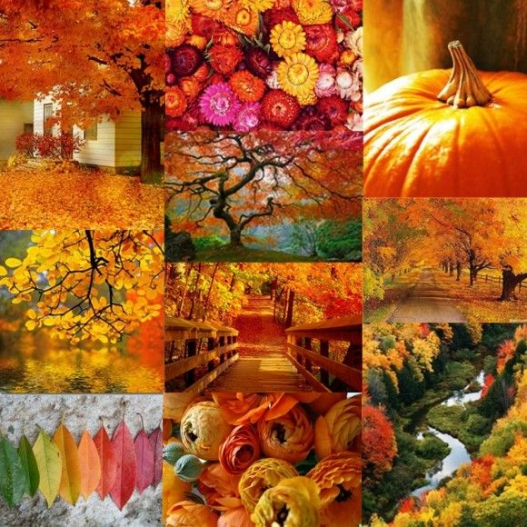 127 Best Images About Color Analysis For H Soft Autumn