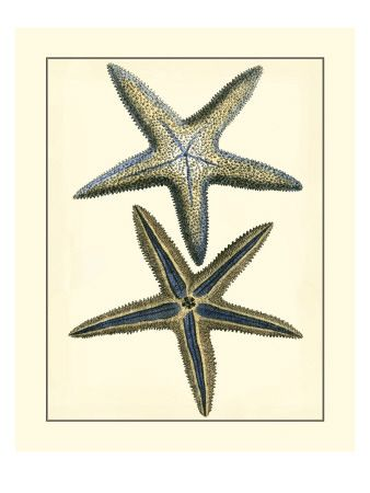 26 best nautical pics sea shells images on pinterest shells starfish posters and prints at art fandeluxe Gallery