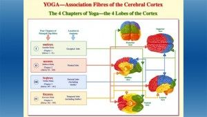 Les 4 chapitres du Yoga Sutra et les 4 lobes du cerveau (graphique sous copyright mis à la disposition exclusive du blog La Voie de l'Ayurvéda)