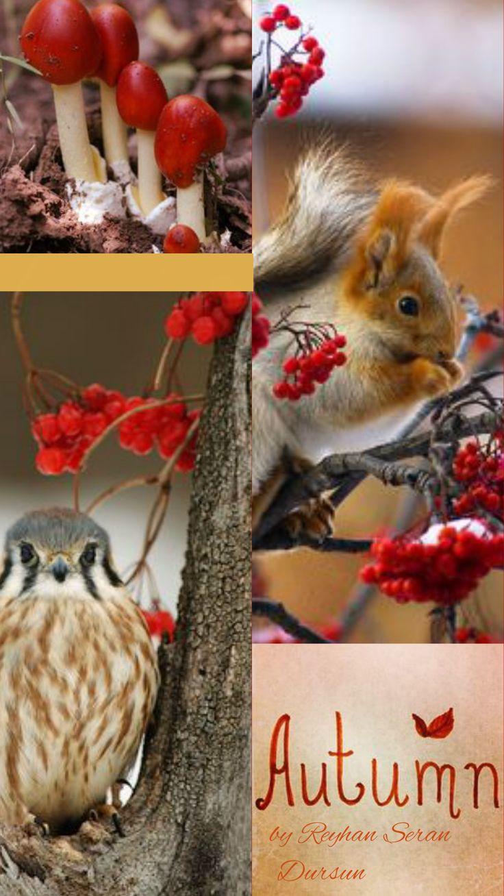 Bildergebnis für Autumn animals Collage