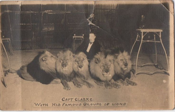LION TAMER CAPT CLARKE WITH HIS FAMOUS GROUPS OF LIONS, ANIMATED POSTCARD RP