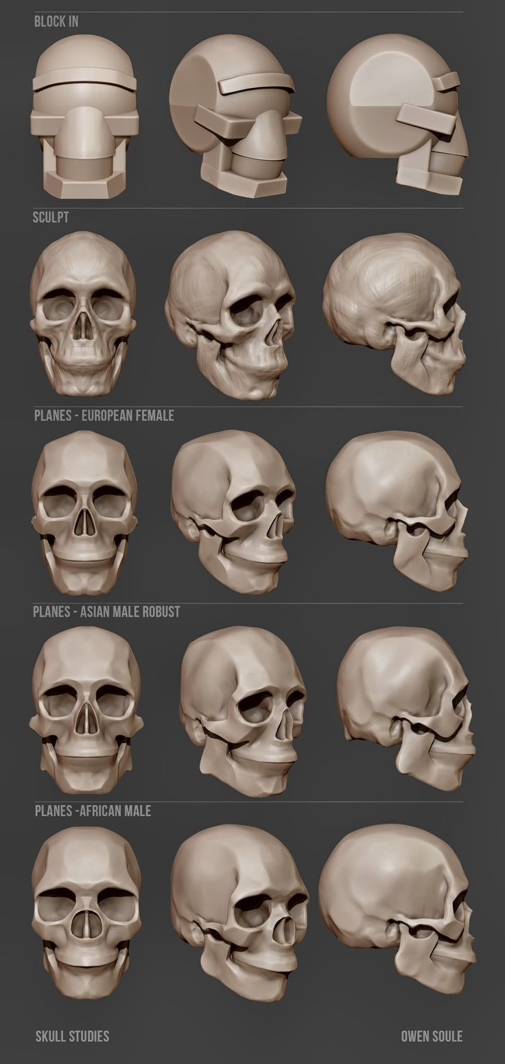 Soule Designs - Skull studies