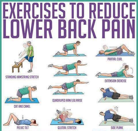exercises to reduce lower back pain charts graphs infographics rh pinterest com  lower back pain stretches diagrams