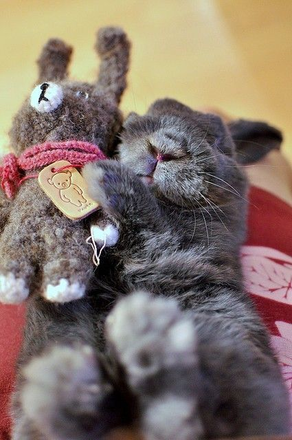 A grey bunny cuddling with a grey rabbit stuffed animal.