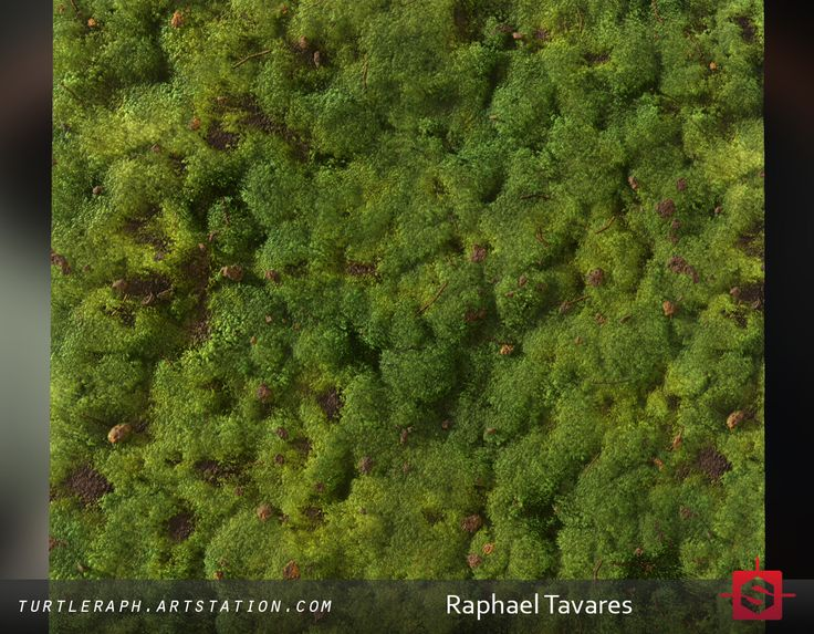 Moss material study, Raphael Tavares on ArtStation at https://www.artstation.com/artwork/y34zJ