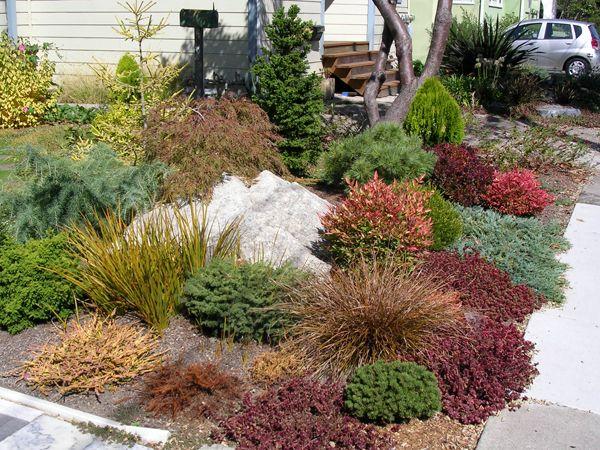 Google image result for for Best dwarf trees for landscaping