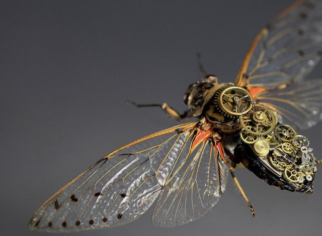 Artist Hatches Steampunk Insects Wearing Mechanical Gears | The Creators Project