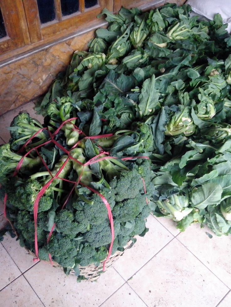 Broccolies at a house of villager