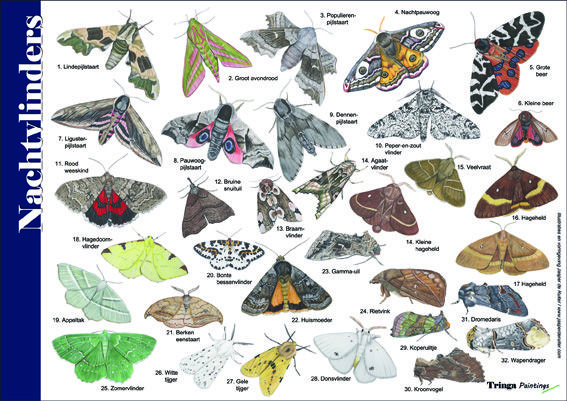Herkenningskaart / Zoekkaart Nachtvlinders. Handige geplastificeerde kaart voor het herkennen van de veel voorkomende nachtvlinders.