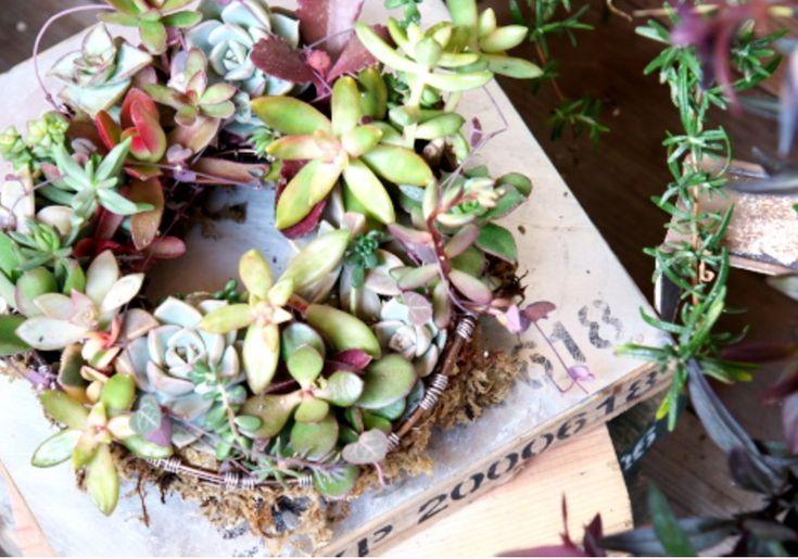グリーンとグリーンのある空間が好きな 『SKIP気分』 RIKAです。  少しずつ暖かくなり お庭仕事が楽しい時期になってきました☆彡    今回は、カゴに多肉植物を植えこむ方法を紹介します^^  自作のワイヤーリースに植えこみましたが  ワイヤー製のカゴに植えこむ際の参考になれば嬉しいです♪     【 使うモノ 】  ・多肉植物  ・水苔  ・固まる土(水を入れて練り、乾燥すると固まる土)  ・割りばし  ・ピンセット     まずは、水にしっかり濡らした水苔を  カゴにまんべんなく敷き詰めます。    そこに、【 固まる土 】 を敷き詰めます。   以前、水苔だけでしたり  植物用の土を入れてしたコトもあるのですが 【 固まる土 】 を使うのが一番やりやすかったですよッ (^^♪    次は、土に割りばしで穴を開けて  そこに、多肉植物を鉢から取り出し  茎だけにしたモノを植えこみます。  多肉植物を乱暴に植えこもうとすると  多肉植物を傷めてしまいます。  必ず割りばしで穴を開けて  優しく丁寧に植えこんでくださいね (b^ー°) …