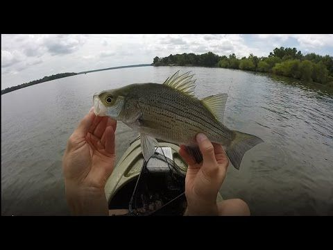 White Bass Kayak Fishing - Tips, lures, Schooling, How to, Summer -  Oklahoma