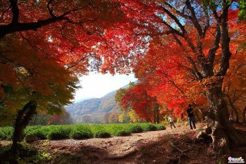 Autumn,Sununsa(Temple),Korea #SouthKorea #Temple #Autumn