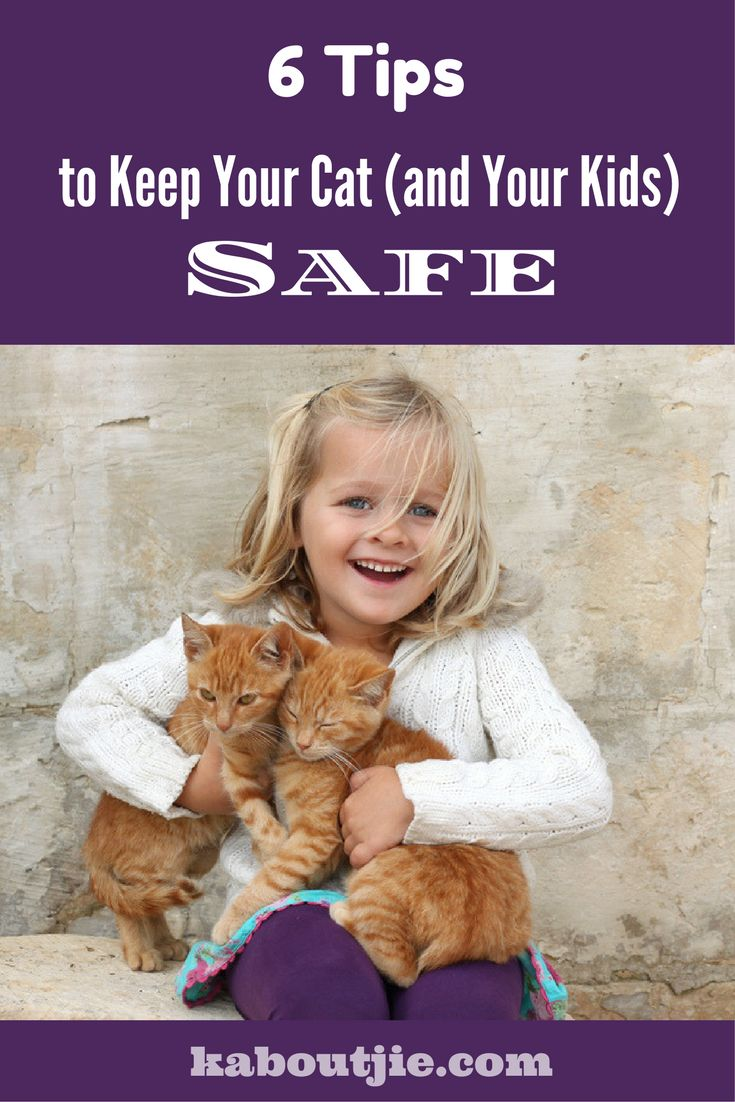6 Tips to Keep Your Cat And Your Kids Safe Cats are amazing animals, yet so many people advice getting rid of your cat when you start a family. This is really not necessary, here are some steps to take to keep your cat and your kids safe.#catsandkids#catsafety#catsandbabies#keepcatsafe#childspetsafety #cats #pets #petsafety #petssafe #safecat #kittycat #kitty #kittysafety #safecatproducts