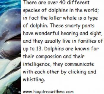 #Eco fun facts about Dolphins
