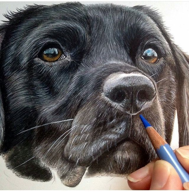 Tips And Techniques For Realistic Colored Pencil Artists Pencil