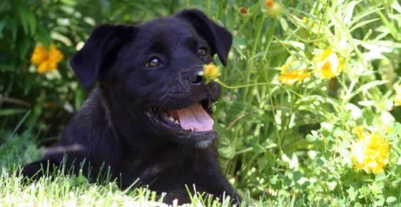 I rimedi naturali per il cane