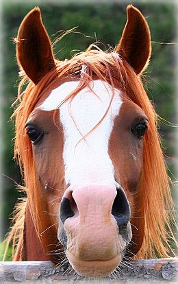 What a sweet horse face!. The look of please take a picture of me. Look how pretty I am. This horse does have a beautiful face.