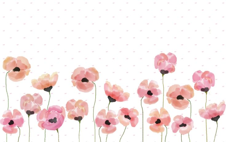 poppies desktop wallpapers