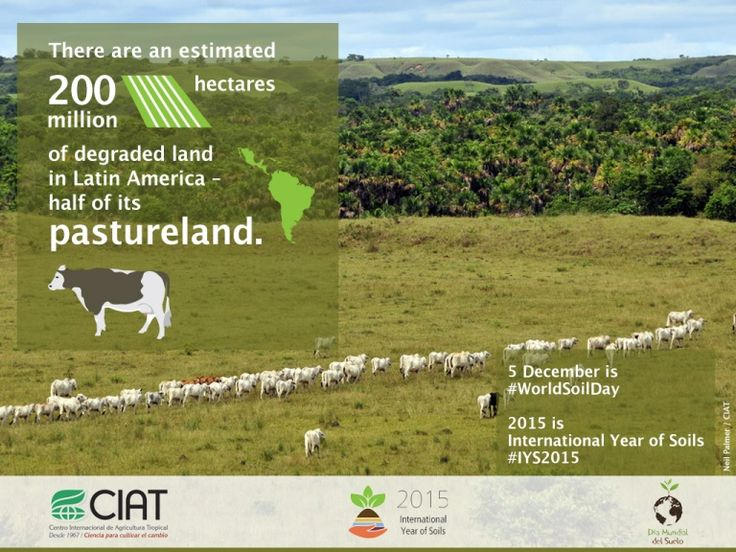#WorldSoilDay / There are an estimated 200 million hectares of degraded land in Latin America – half its pastureland.