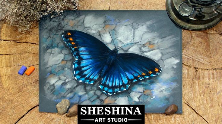 How to draw a butterfly with soft pastels  Sheshina Ekaterina