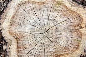 anelli tronco