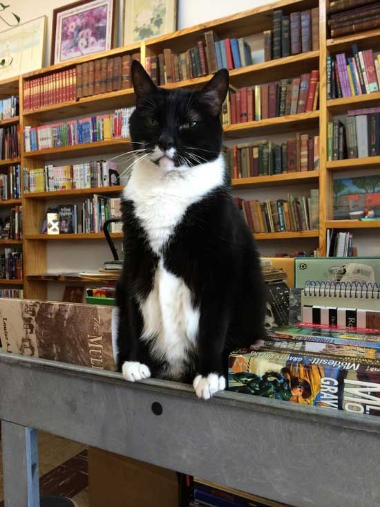 by Caroline Golon   Photo credit: Page the Bookstore Cat's Facebook page.   Despite her cranky demeanor, a tuxedo cat named Page is a popular attraction