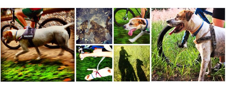 paws and pedals - Providing inspiration to enjoy an active life with your dog