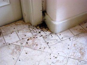 Rengeteg hangyával lehetett és még mindig lehet találkozni a lakásban. Nem árt, hogyha tisztában vagy egy-két trükkel. Vedd fel a harcot te is, küzdj hatásosan.