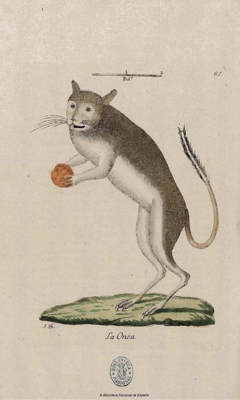 Onza - Coleccion de laminas que representan los animales y monstruos del Real Gabinete de Historia Natural de Madrid, con una descripcion individual de cada uno. Bru de Ramón, Juan Bautista — Libro — 1784-1786