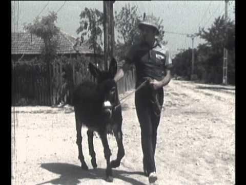 ROSU si NEGRU - Hai, acasa![1984] - YouTube