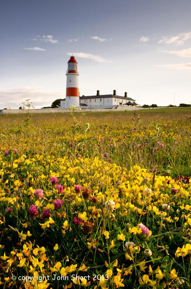 Souter Lighthouse in June.