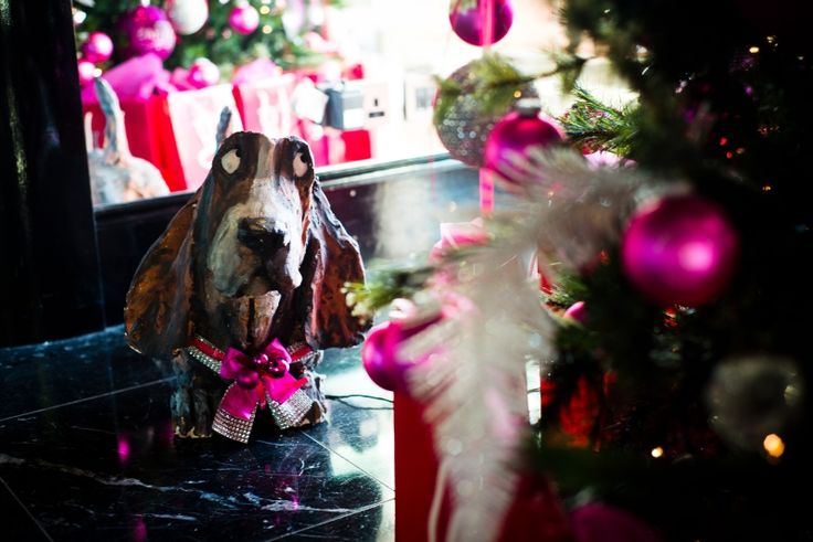 g doggie with festive frosting at the g Hotel & Spa in Galway. www.theghotel.ie
