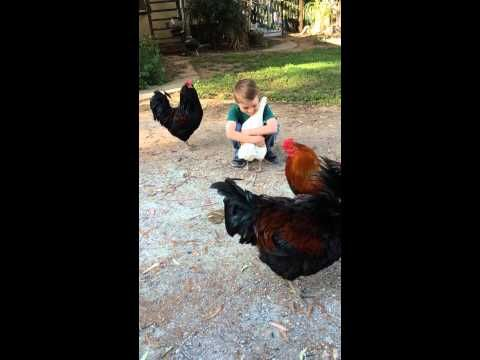 Chicken Runs To Her Boy For A Hug … But Something's Not Quite Right