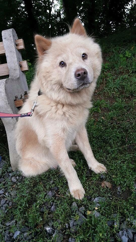 Adopt Sasha On Humane Society Dogs Rescue Dogs Adoption